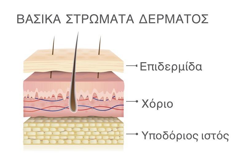 στρώματα του δέρματος